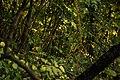 Alberi nel Bosco di Frasassi.jpg