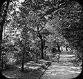 Allée principale du parc, Pau (2908935541).jpg