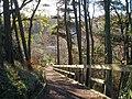 Almondell Country Park near Mid Calder - geograph.org.uk - 318038.jpg