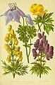 Alpen-Flora für Touristen und Pflanzenfreunde (Pl. 04) (6021499337).jpg