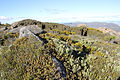 Alpine heathland Mt Field NP.JPG