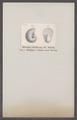 Ammonites striatus - - Print - Iconographia Zoologica - Special Collections University of Amsterdam - UBAINV0274 091 01 0078.tif