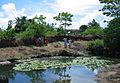 Ananthapura temple Kasaragod, crocodile pond.jpg