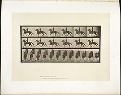 Animal locomotion. Plate 593 (Boston Public Library).jpg