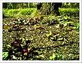 April Freiburg Botanischer Garten - Master Botany Photography 2013 - panoramio (8).jpg