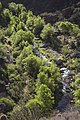 Aravaipa Canyon Wilderness (15224872280).jpg