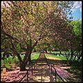 Arlington National Cemetery, Springtime.jpg