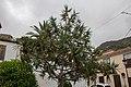 At Tenerife 2019 099.jpg