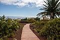 At Tenerife 2020 453.jpg