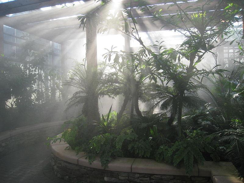 Arquivo: Atlanta Botanical Garden - orquídea house.jpg