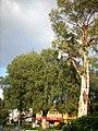Atrio del Tempo de San Benito Abad - panoramio.jpg