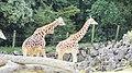 Auckland Zoo, North Island - panoramio (12).jpg