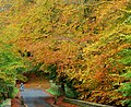 Autumn, Minnowburn, Belfast 2009-1 - geograph.org.uk - 1555442.jpg