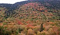 Autumn Hillside 2 (6235565898).jpg