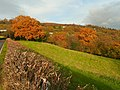 Autumn colour at Bwlch - geograph.org.uk - 1069777.jpg