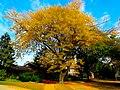 Autumn in Madison - panoramio (2).jpg
