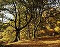 Autumn in Shotover park - geograph.org.uk - 604902.jpg