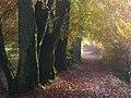 Autumn leaves - geograph.org.uk - 964254.jpg