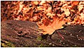 Autumn scene 3.jpg