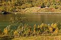 Autumnal foliage at Vesterstraumen, Husjordøya, Øksfjorden, Nordland, Norway, 2015 September.jpg