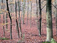 Autumnforest2.jpg