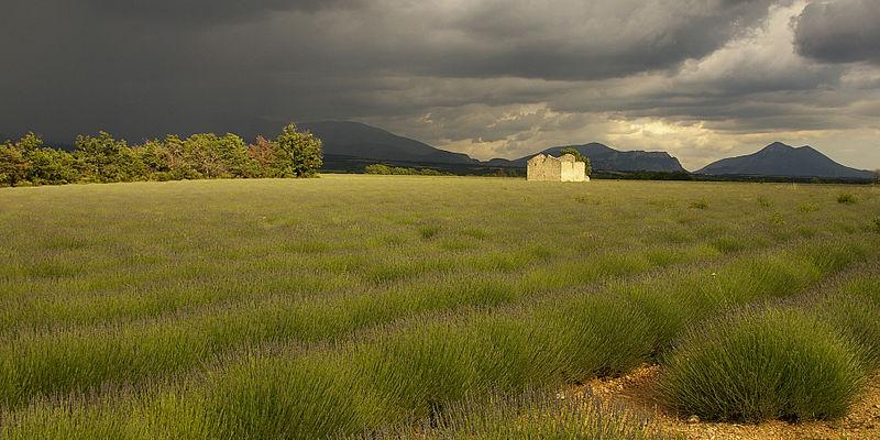 File:Avant l'orage, plateau de Valensole.jpg