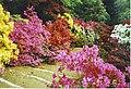 Azaleas at Winkworth Arboretum. - geograph.org.uk - 136575.jpg
