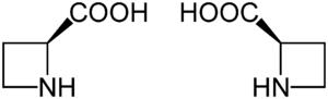 Struktur von Azetidin-2-carbonsäure