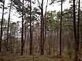 Bagrationovsky District, Kaliningrad Oblast, Russia - panoramio (41).jpg