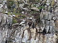 Bahía Ushuaia 241.JPG