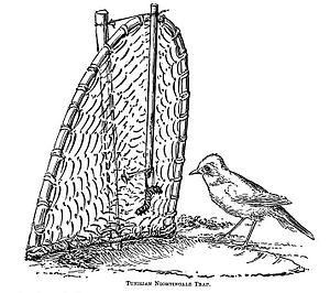 Bird trapping - A baited trap
