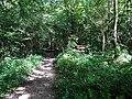 Balade en Forêt de Verrières le 20 août 2017 - 037.jpg