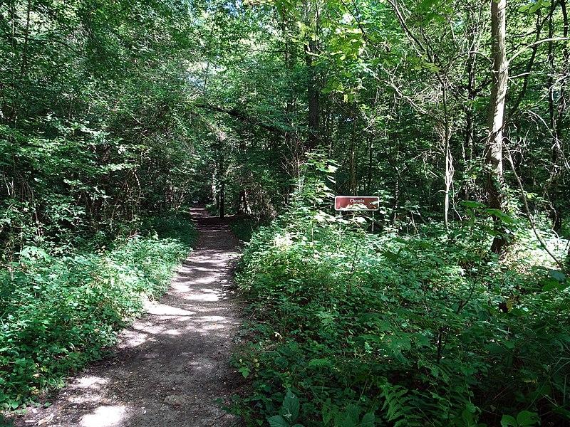 File:Balade en Forêt de Verrières le 20 août 2017 - 037.jpg