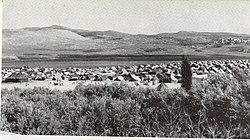 Balata Camp circa 1950.jpg