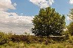 Balloërveld, natuurgebied in Drenthe 18.jpg