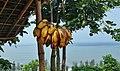 Banana & Sea Cox's Bazar Bangladesh.jpg