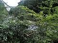 Banat,Nera Canyon - panoramio (12).jpg