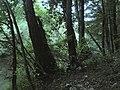 Banat, Nera Canyon - panoramio (17).jpg