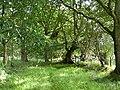 Barns Plantation - geograph.org.uk - 889442.jpg
