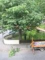 Baumpflegebühne.JPG