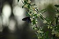 Beautiful-spring-butterfly-flowers - West Virginia - ForestWander.jpg
