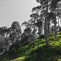 Beautiful landscape of murree Pakistan.jpg
