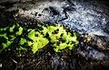 Beautiful moss.jpg