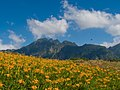 Beautiful orange daylily flower fields on Liushishi Mountain in the afternoon on 25 August 2008.jpg