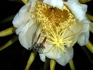 Pollination The cascade of biological processes occurring in plants beginning when the pollen lands on the female reproductive organs of a plant and continuing up to, but not including, fertilization, as defined by sperm-egg cell fusion.