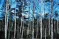 Belarus-Forest-1.jpg