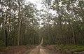 Benandarah NSW 2536, Australia - panoramio (55).jpg