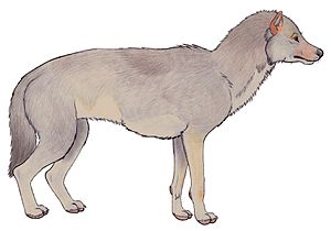 Gray wolf - Artist's impression of a Beringian wolf