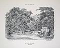 Bertichem 1856 bica rainha laranjeiras.jpg
