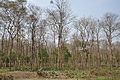 Bethuadahari Wildlife Sanctuary - Indian National Highway 34 - Nadia 2013-03-23 7082.JPG